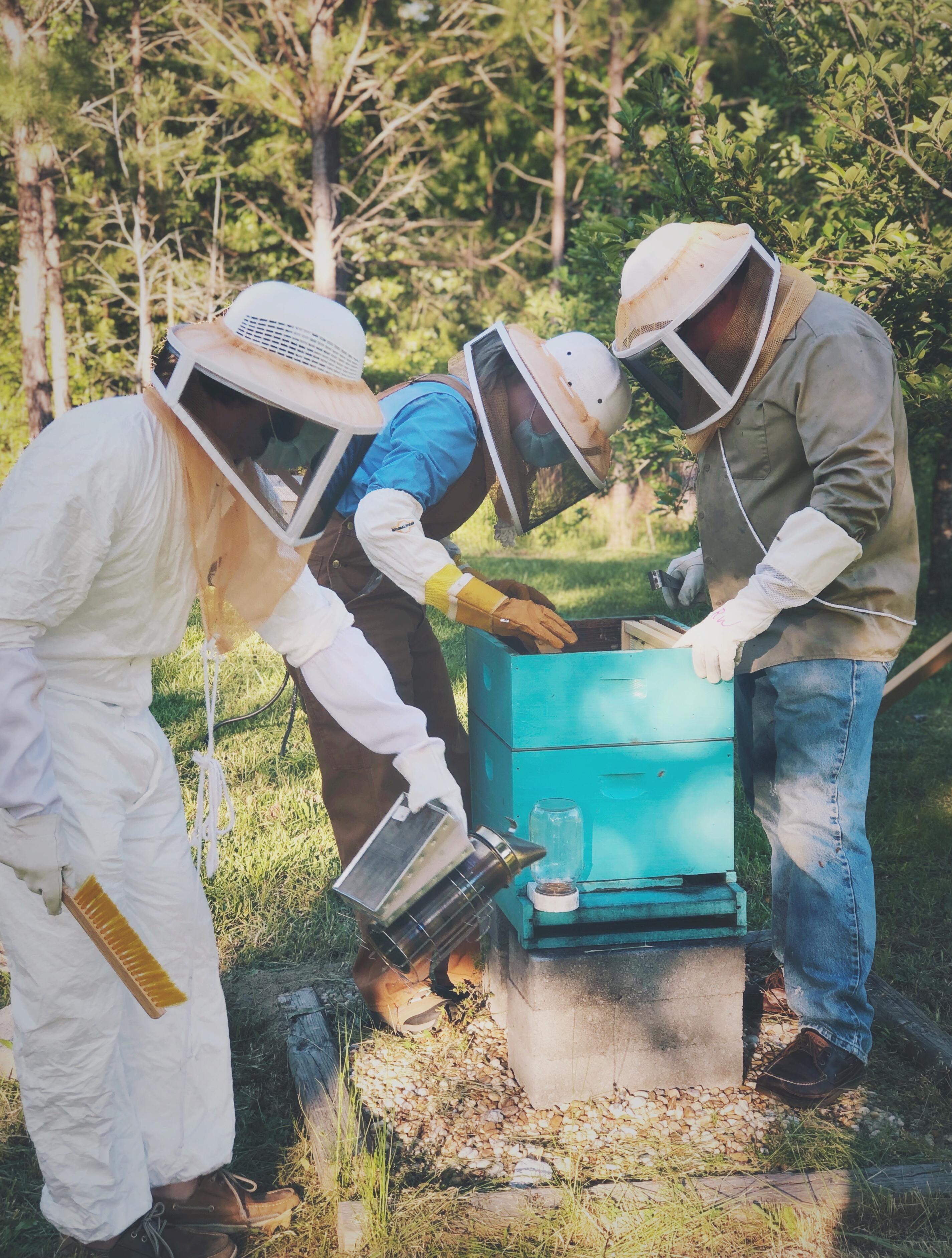beekeeping summer 2020