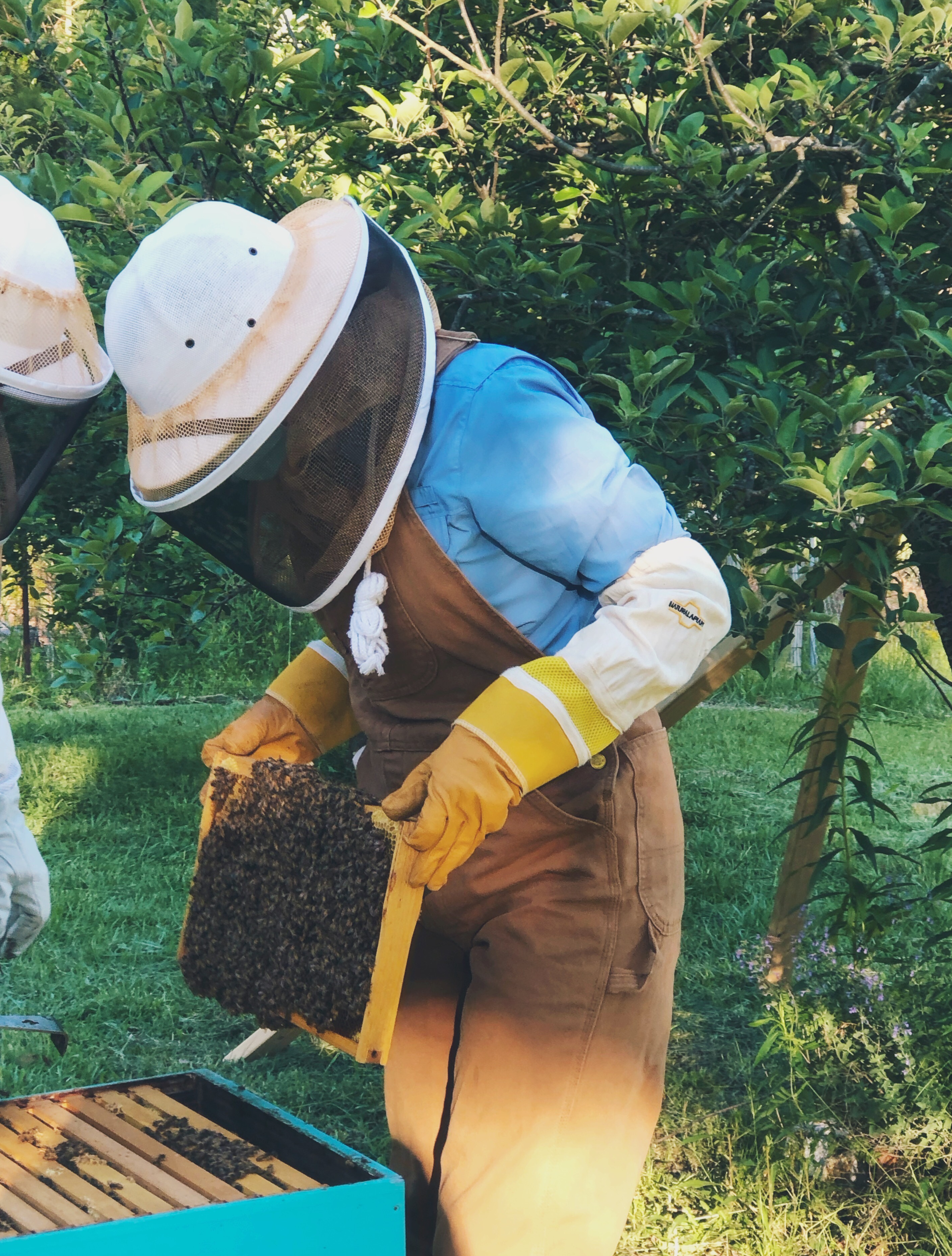 beekeeping 2.0